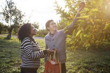 Man giving apple to wife while standing in orchard - CAVF17778