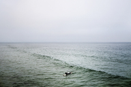 Distant view of woman surfing in sea against clear sky - CAVF19811