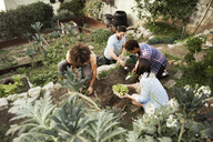 High angle view of multi-ethnic friends gardening at community garden - CAVF19952
