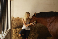 Woman brushing brown horse in stable - CAVF20096