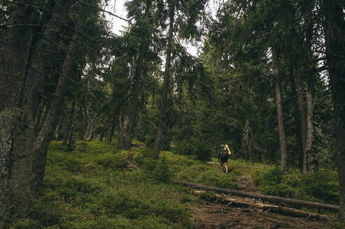 Hiker walking amidst trees in forest - CAVF20132