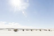 Hooded beach chairs at White Sands National Monument against sky on sunny day - CAVF20750