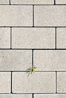 Overhead view of plant growing on concrete footpath - CAVF22664