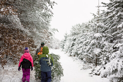 Rear view of family carrying pine tree while walking on snow covered field - CAVF24392