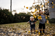 Cheerful brothers playing with maple leaves in backyard during autumn - CAVF24741
