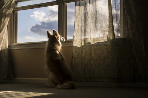 Rear view of dog sitting by window - CAVF24789
