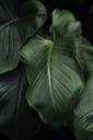 Detail of green leaf - FOLF00014