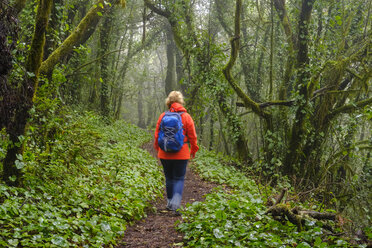 Spain, Canary Islands, La Gomera,  woman hiking through cloud forest at Garajonay National Park - SIEF07757