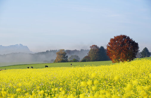 Germany, Bavaria, Upper Bavaria, autumnal andscape near Icking - LHF00552