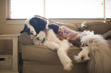 Girl relaxing with Saint Bernard on sofa at home - CAVF26407