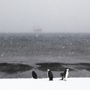 Penguins on snow covered Deception Island against sea - CAVF26473