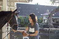 Woman feeding coconut water to horse - CAVF26838