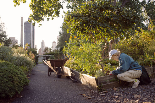Side view of senior woman working at community garden - CAVF26886