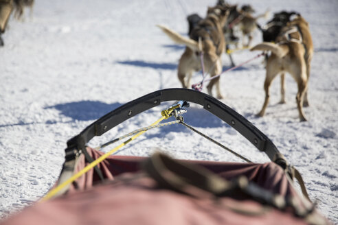 Dogs pulling sleigh on snow covered field - CAVF27011