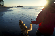 Rear view of hiker with Golden Retriever walking at Ruby beach during sunset - CAVF27113