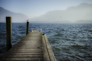 Austria, Salzkammergut, Lake Mondsee, wooden walkway and seagulls in the morning - STCF00578