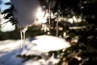 Close-up of snow and icicles on tree - CAVF27268