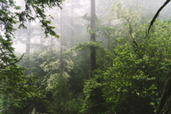 Scenic view of forest during foggy weather - CAVF27283