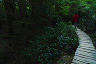 Rear view of hiker walking on boardwalk in forest - CAVF27346