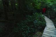 Rear view of hiker walking on boardwalk in forest - CAVF27346