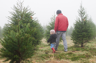 Rear view of man with daughter walking in pine tree farm - CAVF27732