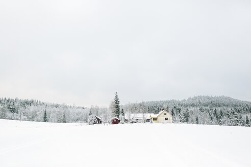 Landscape of winter forest with houses in foreground - FOLF00126