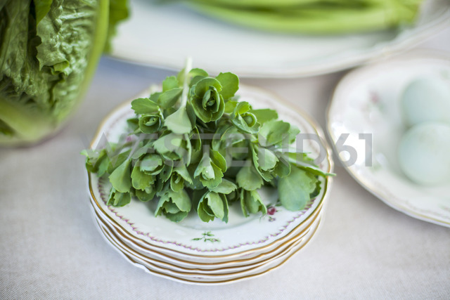 Sedum on plate - KVF00122