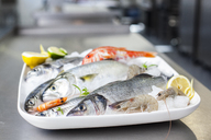 Platter with raw fish and seafood - KVF00134