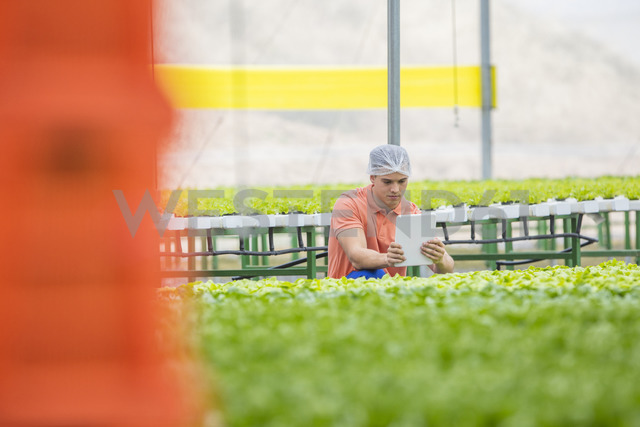 Greenhouse worker using digital tablet - ZEF15198