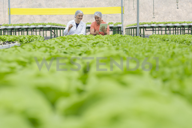 Workers in greenhouse inspecting plants - ZEF15204