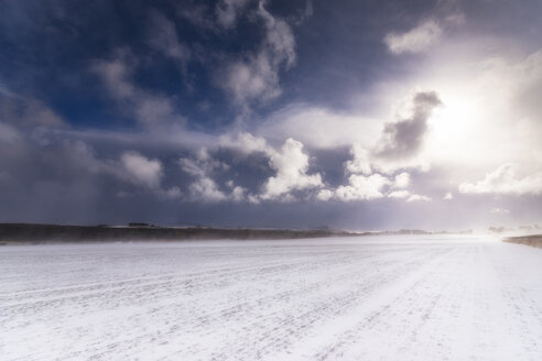 United Kingdom, Scotland, East Lothian, North Berwick, winter storm, field against the sun - SMAF00987