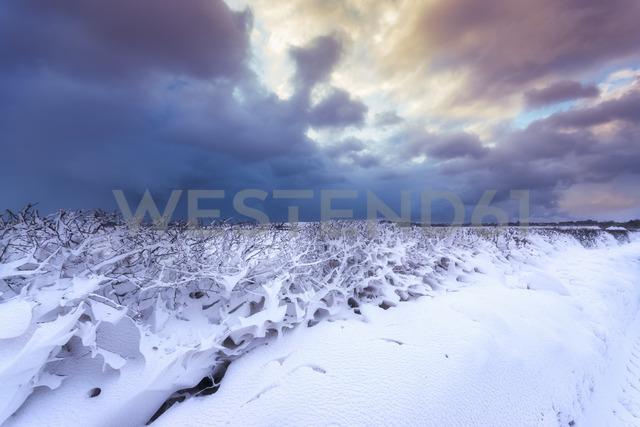 United Kingdom, Scotland, East Lothian, North Berwick, snowdrifts through hegde - SMAF00990
