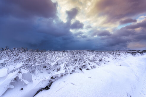 United Kingdom, Scotland, East Lothian, North Berwick, snowdrifts through hegde - SMAF00990