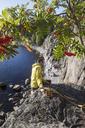 Mid adult man sitting on rocks - FOLF00862