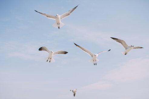 Low angle view of seagulls flying in sky - CAVF28734