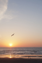 View of Biscay Bay with seagull in flight at sunset - FOLF02172