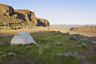 Tent on field by mountain at Gifford Pinchot National Forest - CAVF30167