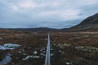 Straight empty road through meadows - FOLF02514