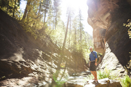 Hiker looking up while standing in forest on sunny day - CAVF30740