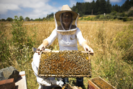 Female beekeeper holding honeycomb frame at field - CAVF30764