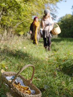 Woman picking chanterelle mushrooms - FOLF02835