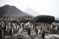 High angle view of penguins on rocky shore against clear sky - CAVF31066