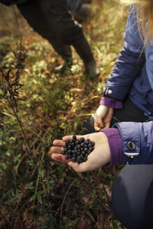 Woman holding blueberries while crouching on field - CAVF31087