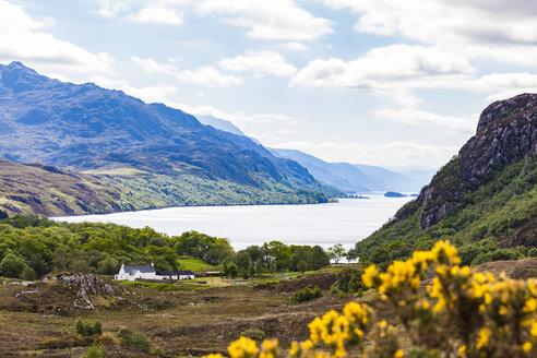 United Kingdom, Scotland, Highland, Loch Maree, freshwater lake, farmhouse - WDF04495