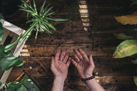 Woman with plants showing her hands full of soil - SKCF00360