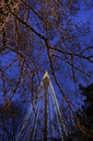 Bare tree and lamppost decorated with fairy lights at Liseberg Funfair in Gothenburg - FOLF03799