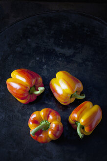 Four tiger bell peppers on dark metal - CSF29025