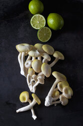 Golden Oyster Mushrooms and limes on dark metal - CSF29061