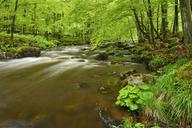 Germany, Saxony-Anhalt, Schierke, Harz, Bode river in the Elendstal valley - RUEF01832