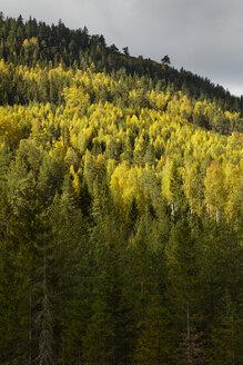Forest - FOLF05455